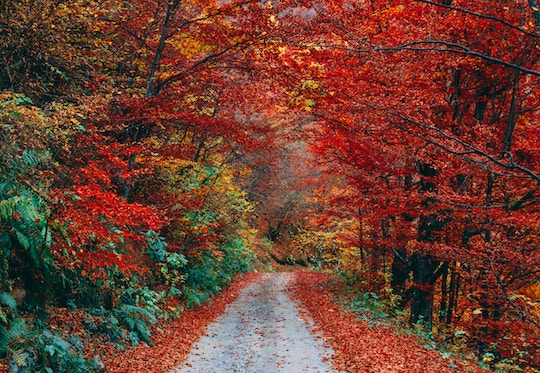 Image of bright autumn leaves