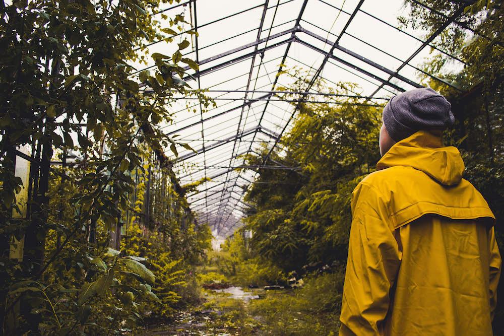 Image of a greenhouse full of weeds