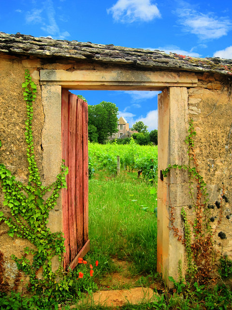 Image of an open door in a field