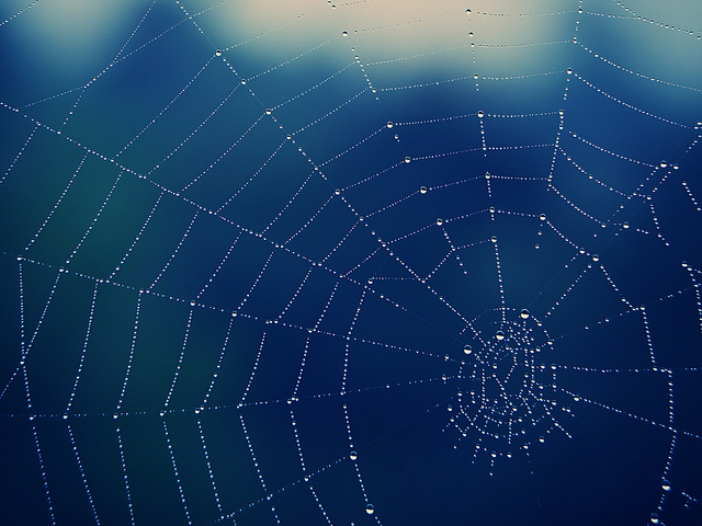 Spiderweb Image from Flickr