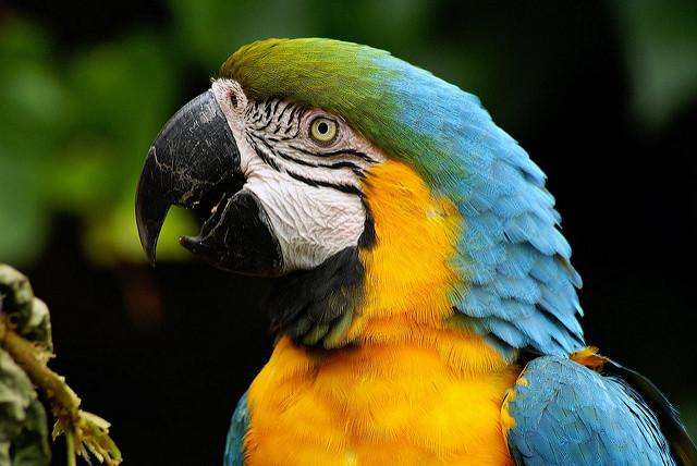 Image of a parrot
