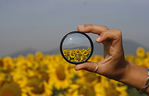 image of flowers through a magnifying glass