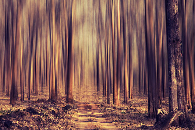 Image of a path in the forest