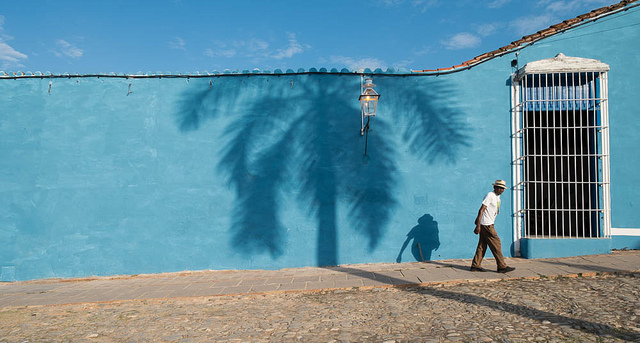 Image of a shadow of a palm tree