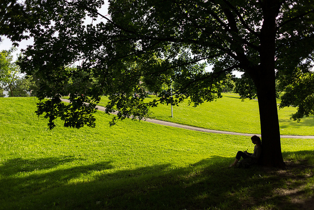 Image of a person sitting in the shade under a tree