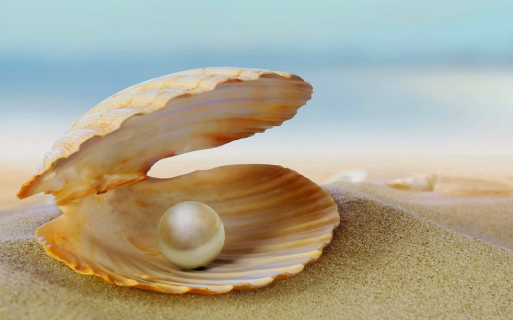 Image of a peral in a shell