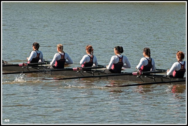 Image of a rowing team