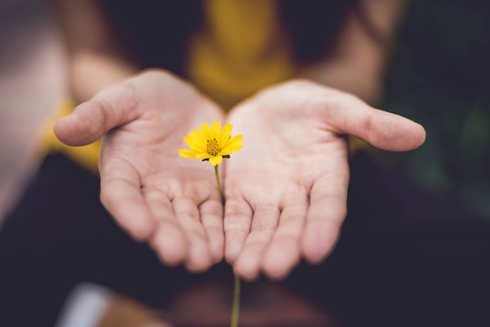 Image of a hand holding a flower