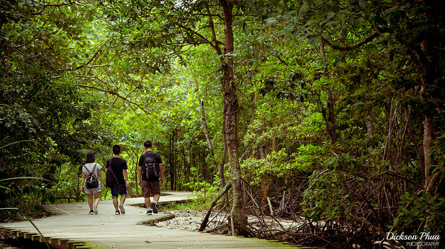 Image of people walking through the forest