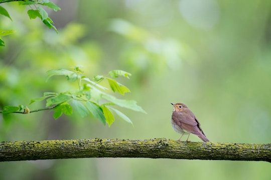 Image of a singing bird on a green tree
