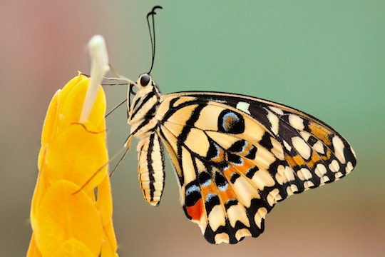 Close-up image of a butterfly