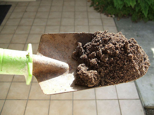 Image of a shovel full of dirt