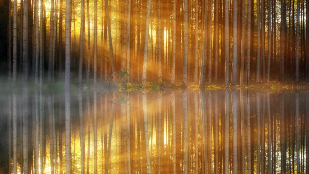 Image of a forest reflected in a lake