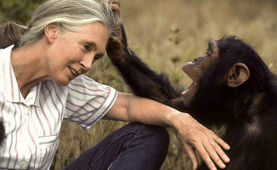 Image of Jane Goodall with a chimp