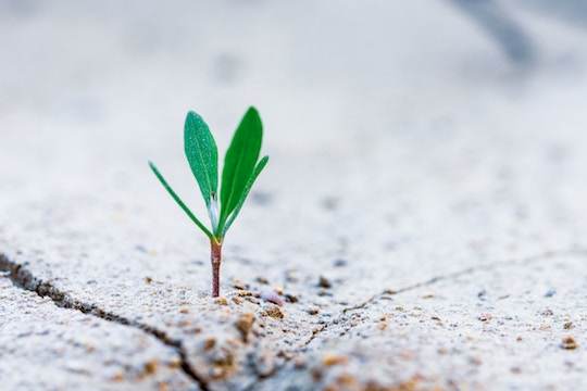 Image of a plant coming through cement