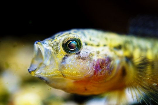 Image of a brightly colored fish with an open mouth
