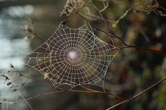 Image of a large spider web