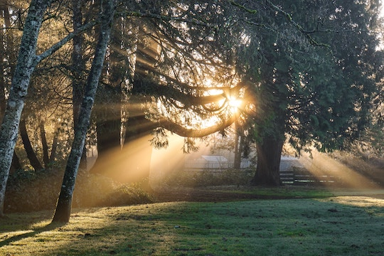 Image of a sunbeam coming through a tree