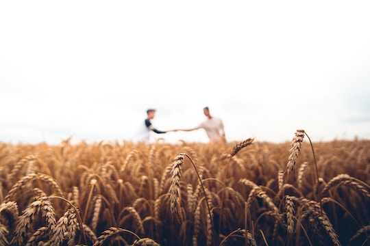 Image of two men in a wheat field